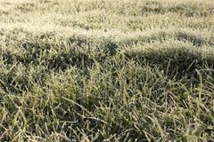 Gras abgedeckt mit Frost Lizenzfreie Stockfotografie