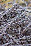 Gras abgedeckt mit Frost Stockfotos