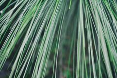 Gras abstract art background design healthy yoga stock image