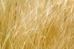 Gras - Achtergrond Royalty-vrije Stock Fotografie