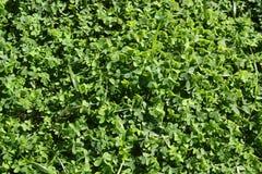 Gras - Alentejo Royalty-vrije Stock Foto