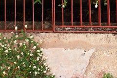 Gras als Hintergrund und Beschaffenheit Stockbilder