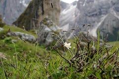 Gras altos e montanha distintiva no fundo Imagem de Stock Royalty Free