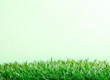 Gras & achtergrond Royalty-vrije Stock Afbeeldingen