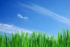 Gras & hemel Stock Foto