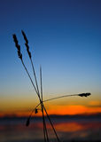 Gras & zonsondergang Stock Afbeelding