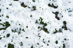 Gras archivierte bedeckt im hellen Schnee Stockfoto