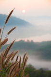 Gras auf Ansicht des Gebirgshintergrundes Lizenzfreie Stockbilder