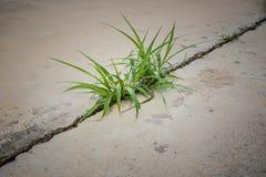 Gras auf Beton Stockfoto