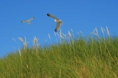 Gras auf Dünen lizenzfreies stockbild