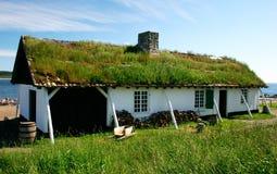 Gras auf dem Dach Stockbilder