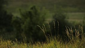 Gras auf dem Feld stock video