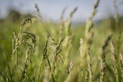 Gras auf dem Feld Lizenzfreie Stockbilder