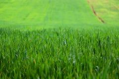 Gras auf dem Feld lizenzfreies stockfoto