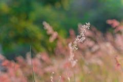Gras auf dem Feld Stockbild