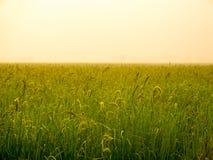 Gras auf dem Feld während des Sonnenaufgangs Stockbilder
