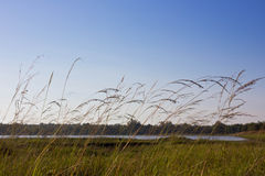 Gras auf dem Gebiet Lizenzfreies Stockfoto