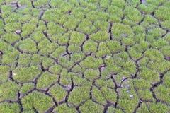 Gras auf dem gebrochenen Boden Stockfoto