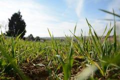 Gras auf dem Grasland Stockfoto