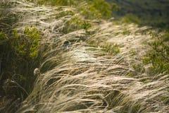 Gras auf dem Hügel Stockfotos