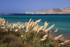 Gras auf dem Meer Stockbilder