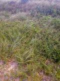 Gras auf dem Sand des Strandes in Brasilien lizenzfreies stockbild