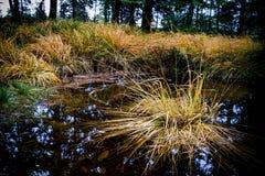 Gras auf dem Teich Lizenzfreie Stockbilder