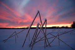Gras auf dem Winter Stockfotografie