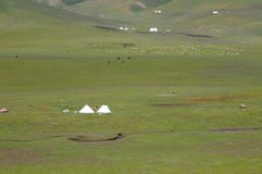 Gras auf dem Zelt und der Menge Stockfoto