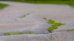 Gras auf der Spur 2 lizenzfreies stockbild