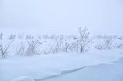 Gras auf der Wiese bedeckt mit Schnee Lizenzfreie Stockfotos