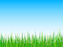 Gras auf einem Hintergrund des blauen Himmels. Vektor Stockbilder
