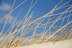 Gras auf einer Düne lizenzfreie stockfotos
