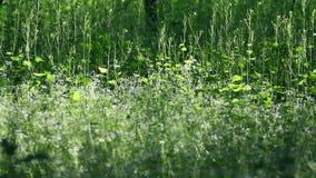 Gras auf einer hölzernen Wiese stock video footage
