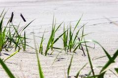 Gras auf einer weißen Sandnahaufnahme Lizenzfreies Stockbild