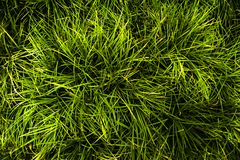 Gras auf Feld, Blatt sind viel Linie stockbild