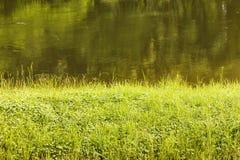Gras auf Flussufer Stockbild