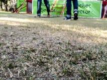Gras auf Fokus Stockfotografie