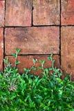 Gras auf gebackenem Lehmziegelsteinhintergrund Stockfotos