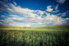 Gras auf Himmelhintergrund Stockbild