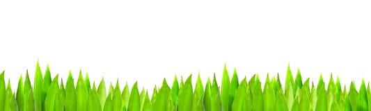 Gras auf Hintergrund des blauen Himmels Stockfotografie