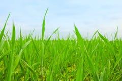 Gras auf Hinterhofrasen - Haus, Haus und Gartenarbeitkonzept stockbild