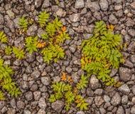 Gras auf Kies Lizenzfreie Stockfotos