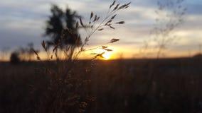 Gras auf Morgen Lizenzfreies Stockbild