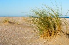 Gras auf niederländischem Strand Stockfotos
