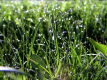 Gras auf Rasen stockfotos