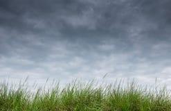 Gras auf Regenhimmel Stockfoto