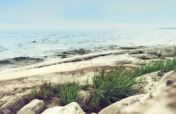Gras auf Rocky Seashore Stockfoto