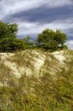 Gras auf Sanddünen Stockfotografie