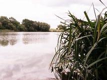 Gras auf Seeufer Stockfotos